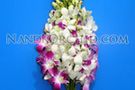 Dendrobium Bouquet: 10 stems